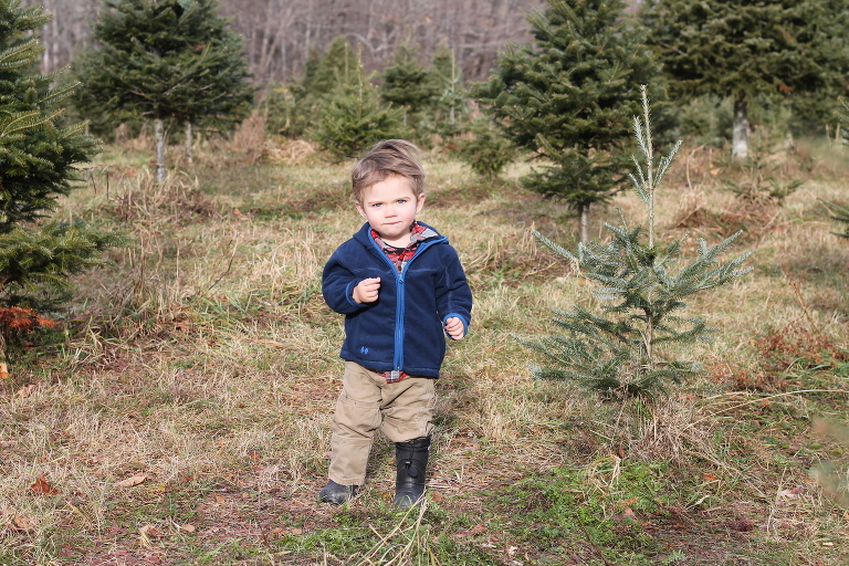 Hesitantly Building Memories At Red Robins Christmas Tree Farm